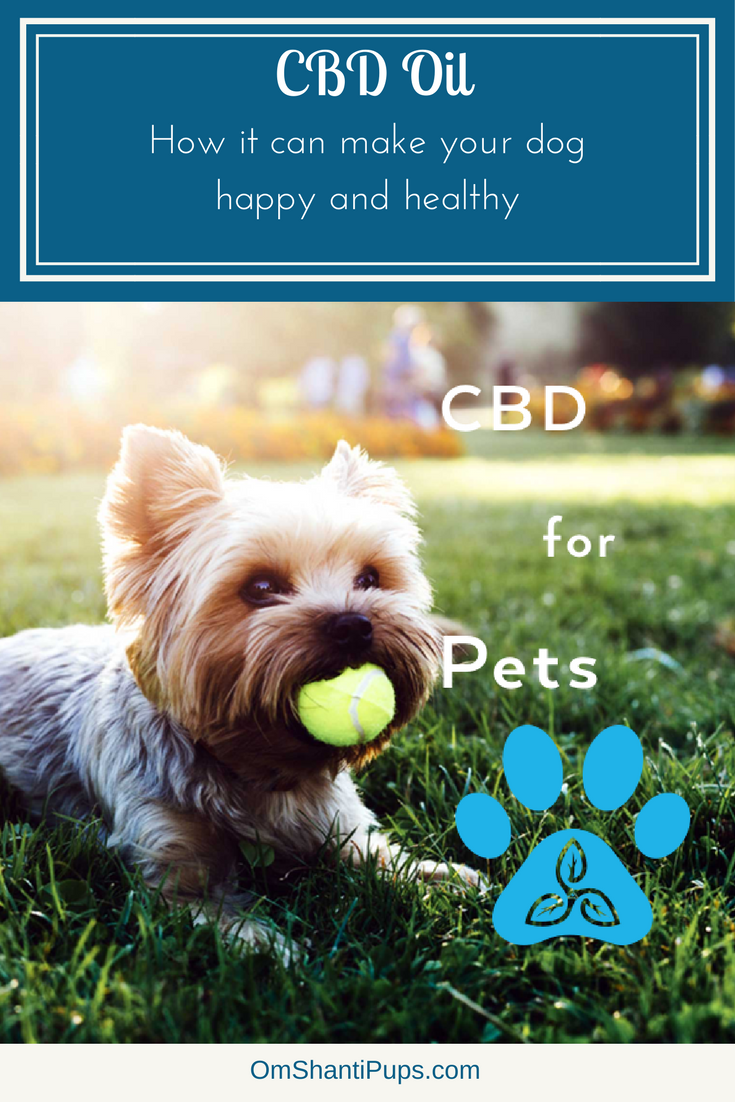 How CBD Oil Can Make Your Dog Happy and Healthy | Dog Training and