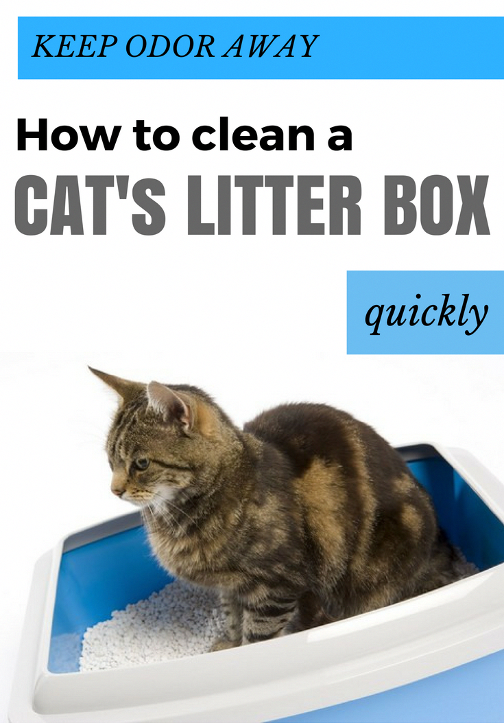 Chivalrous cat training tips litter box Stay connected on