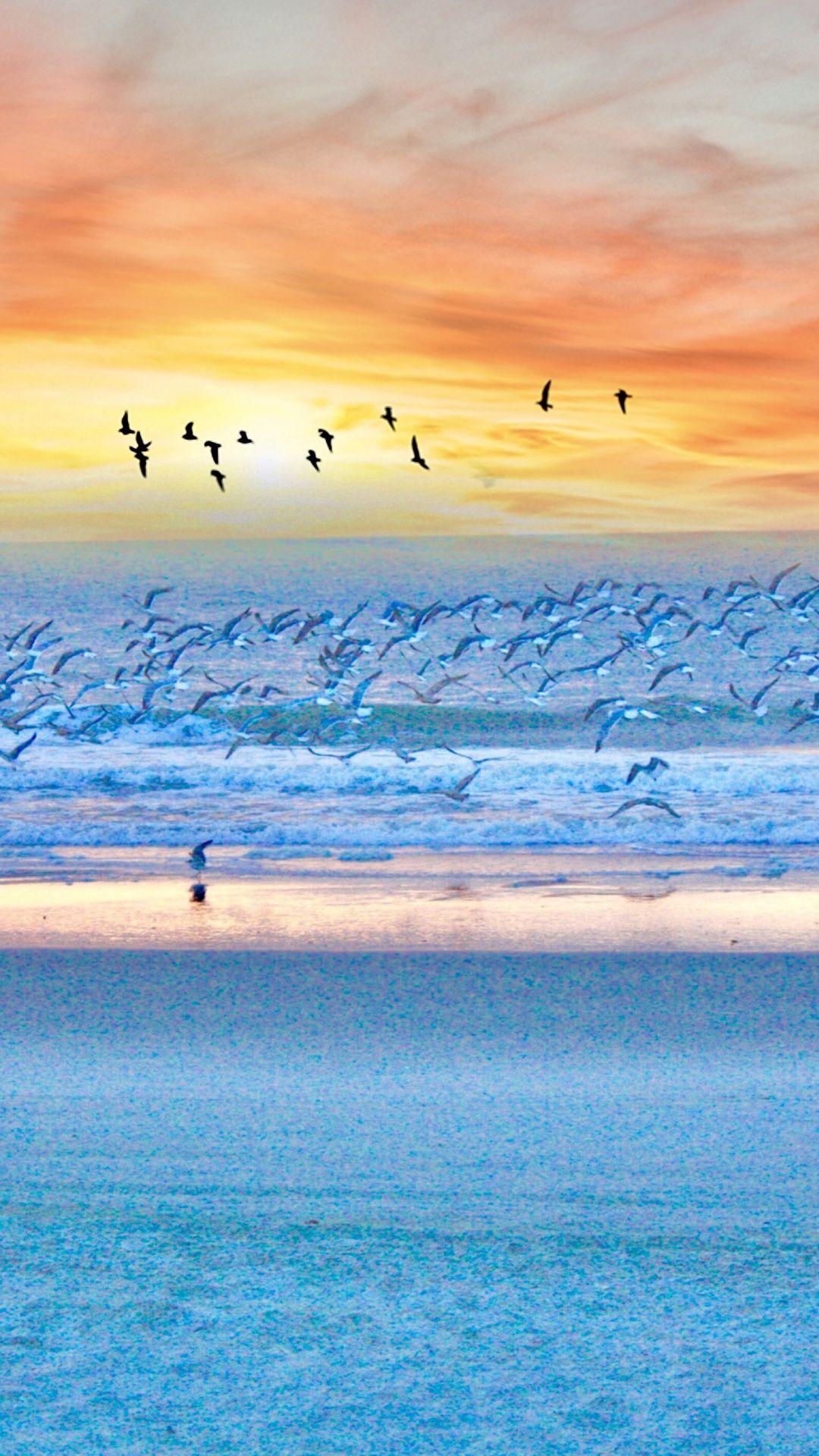 Seagulls Birds Beach Sunset Sea 1080x1920 Wallpaper Ocean Landscape Ocean Photography Beautiful Beach Pictures