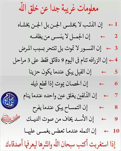 معلومات غريبه Quran Quotes Inspirational Islamic Quotes Islamic Inspirational Quotes