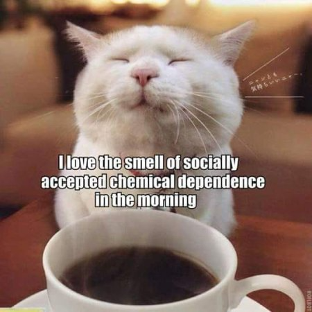 Funny Memes And Such Cheer Up Thread Page 1 In 2021 Coffee Humor Craving Coffee Friday Humor