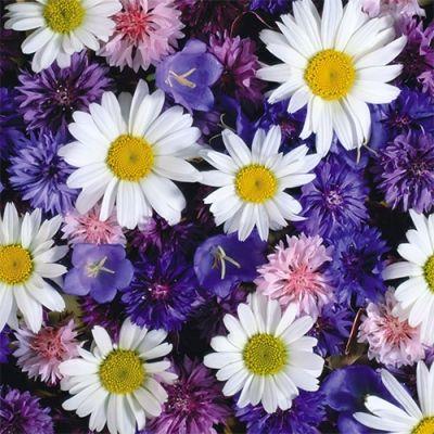Скачать раскраски цветы | Цветы, Раскраски