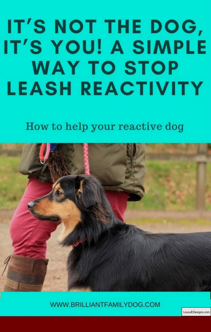 Dog Training Tips For Retrieving And Pics Of How To Train Your