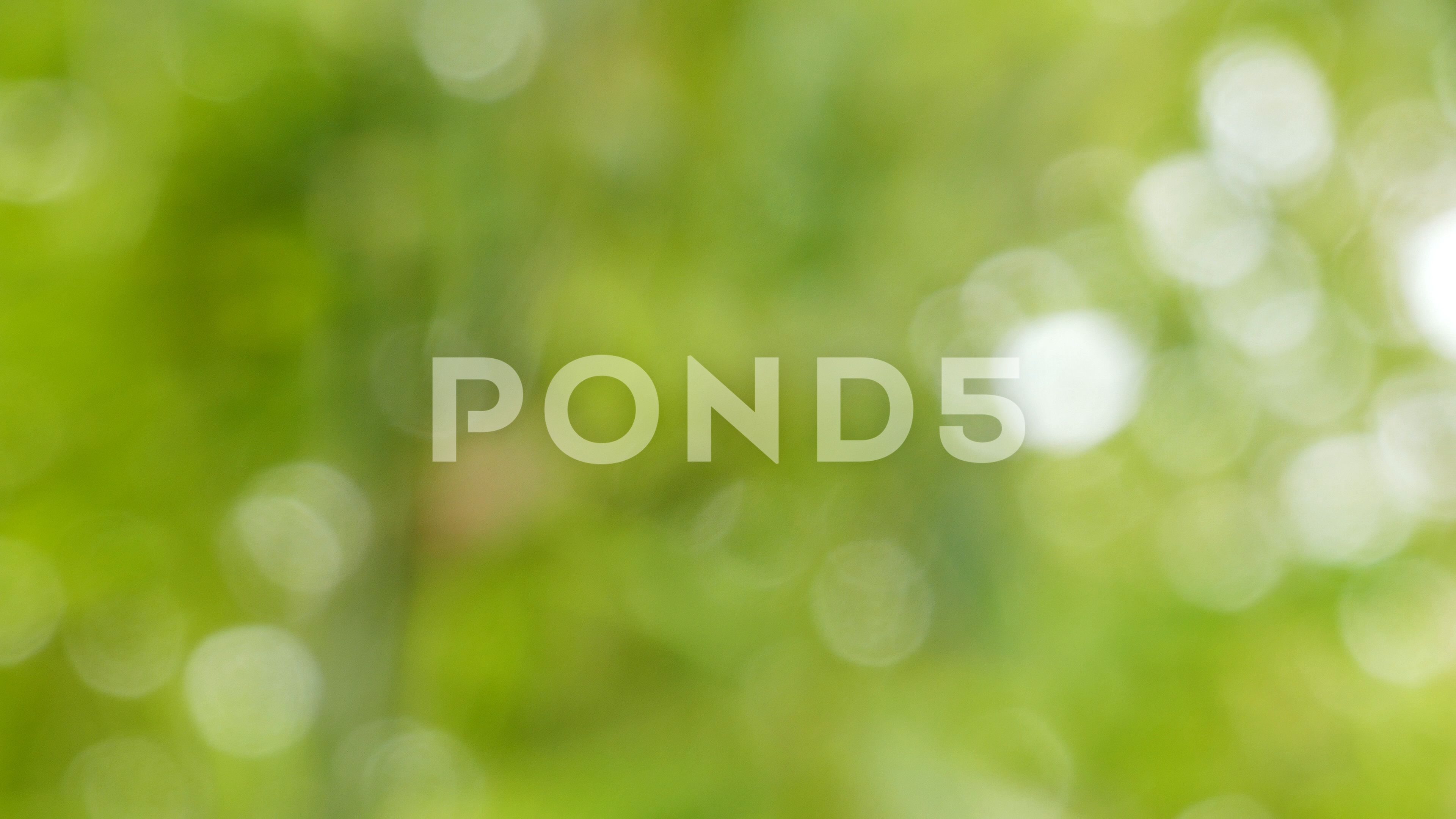 Defocused Abstract Nature Background With Green Leaves And Bokeh Lights Stock Footage Ad Background Green Na Abstract Nature Nature Backgrounds Bokeh Lights