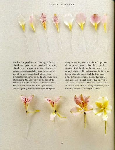 Sugar Flowers Alstroemeria 2 Albumes Web De Picasa Flores De Pasta De Goma Flores De Azucar Flores