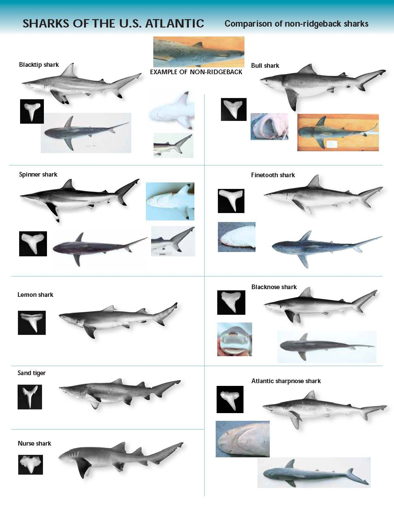 Sharkplacard 2 Page 1 With Images