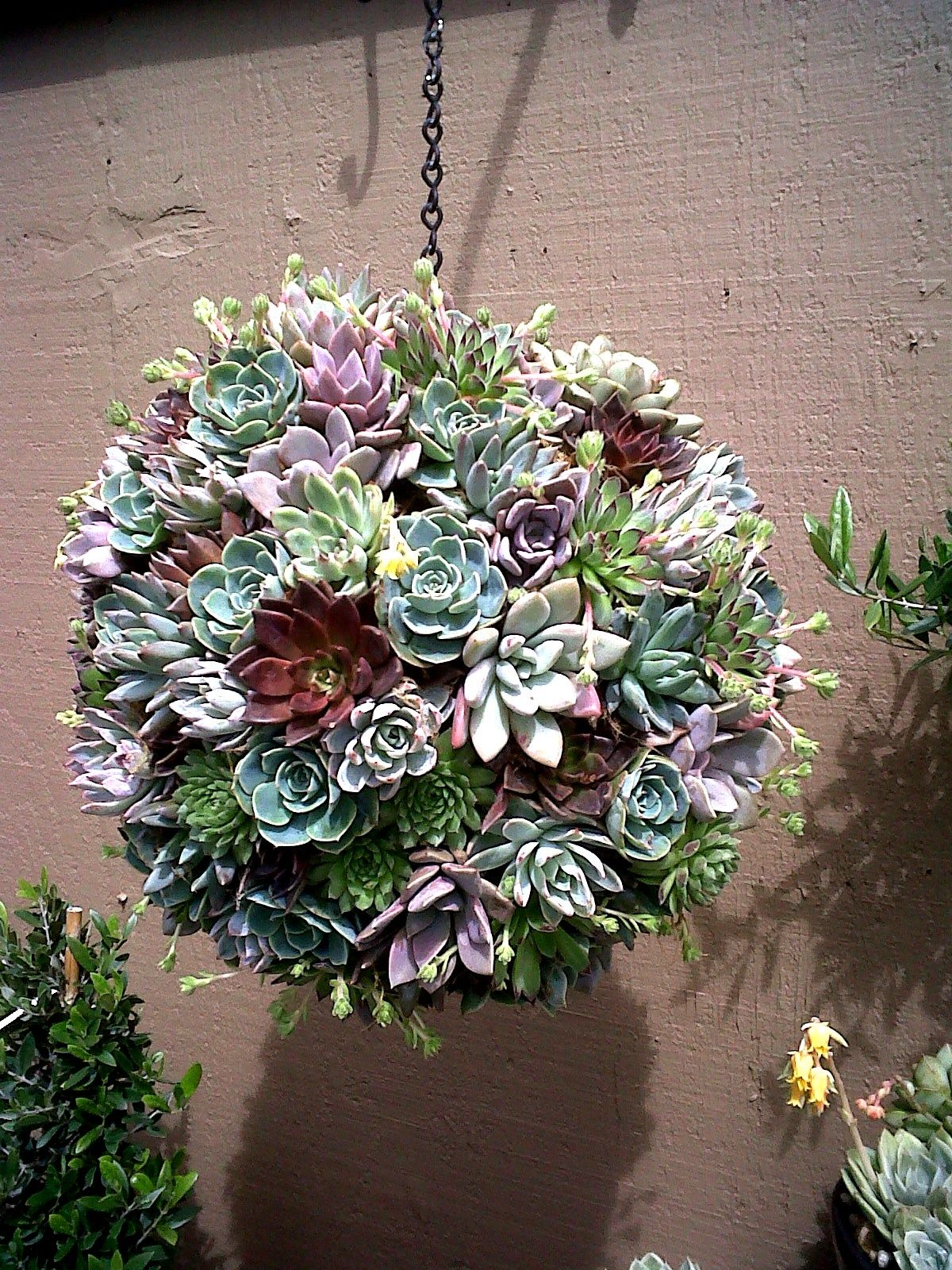 Make a Hanging Succulent Ball with the