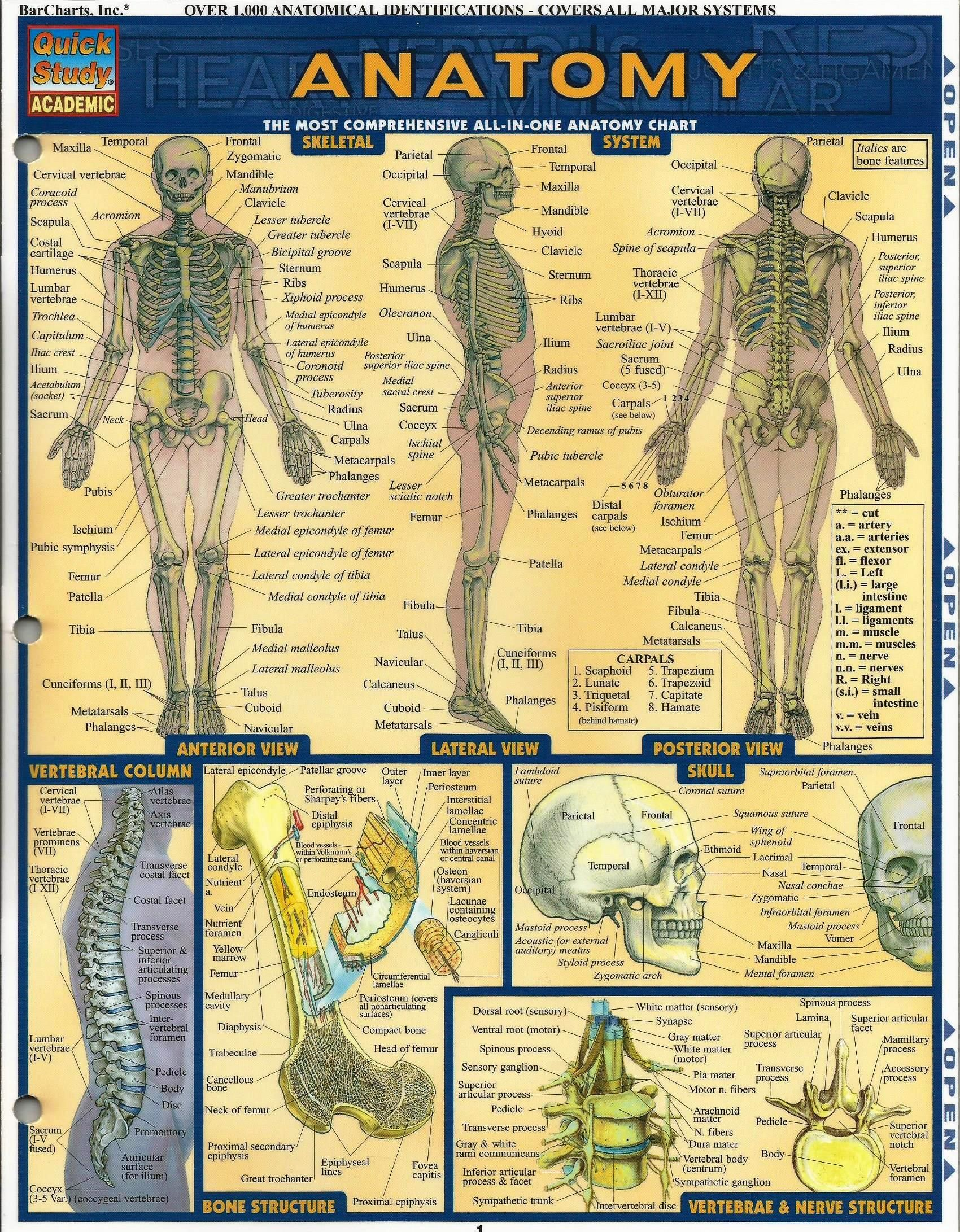 Anatomy of Bone Structure | INFOGRAPHICS | Pinterest | Anatomy and ...