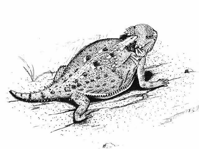 horned frog coloring pages - Coloring Pages Frogs Toads