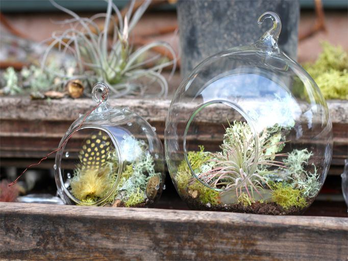 hanging terrariums: cocoon home design | Botanical and Outdoor ...