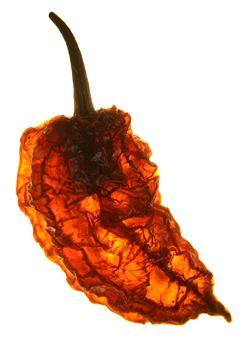 Dried Habanero Chilli