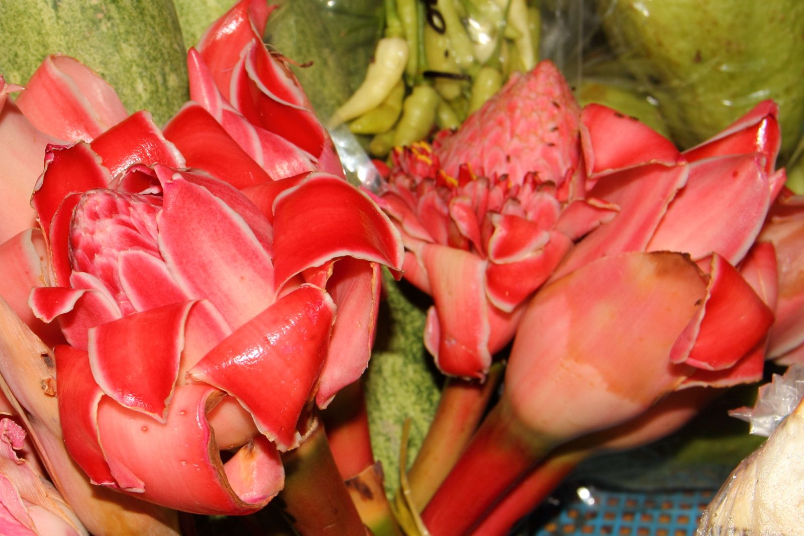 Vegetable Ginger Flower Has A Certain Smell Usually Cooked Or Mixed In Curry And Tom Yam Dishes Ginger Flower Vegetables Yams