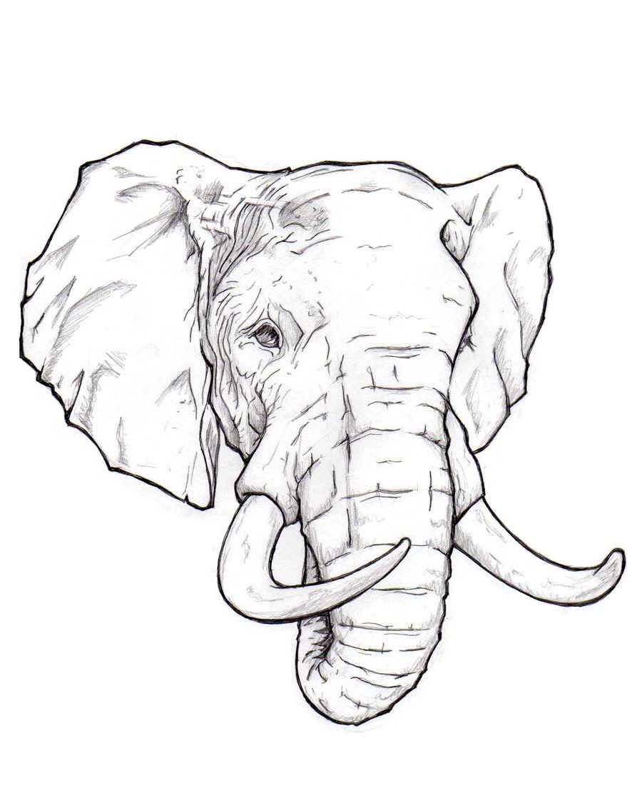 The 25+ best Elephant head drawing ideas on PinterestThree Headed Animal Drawing