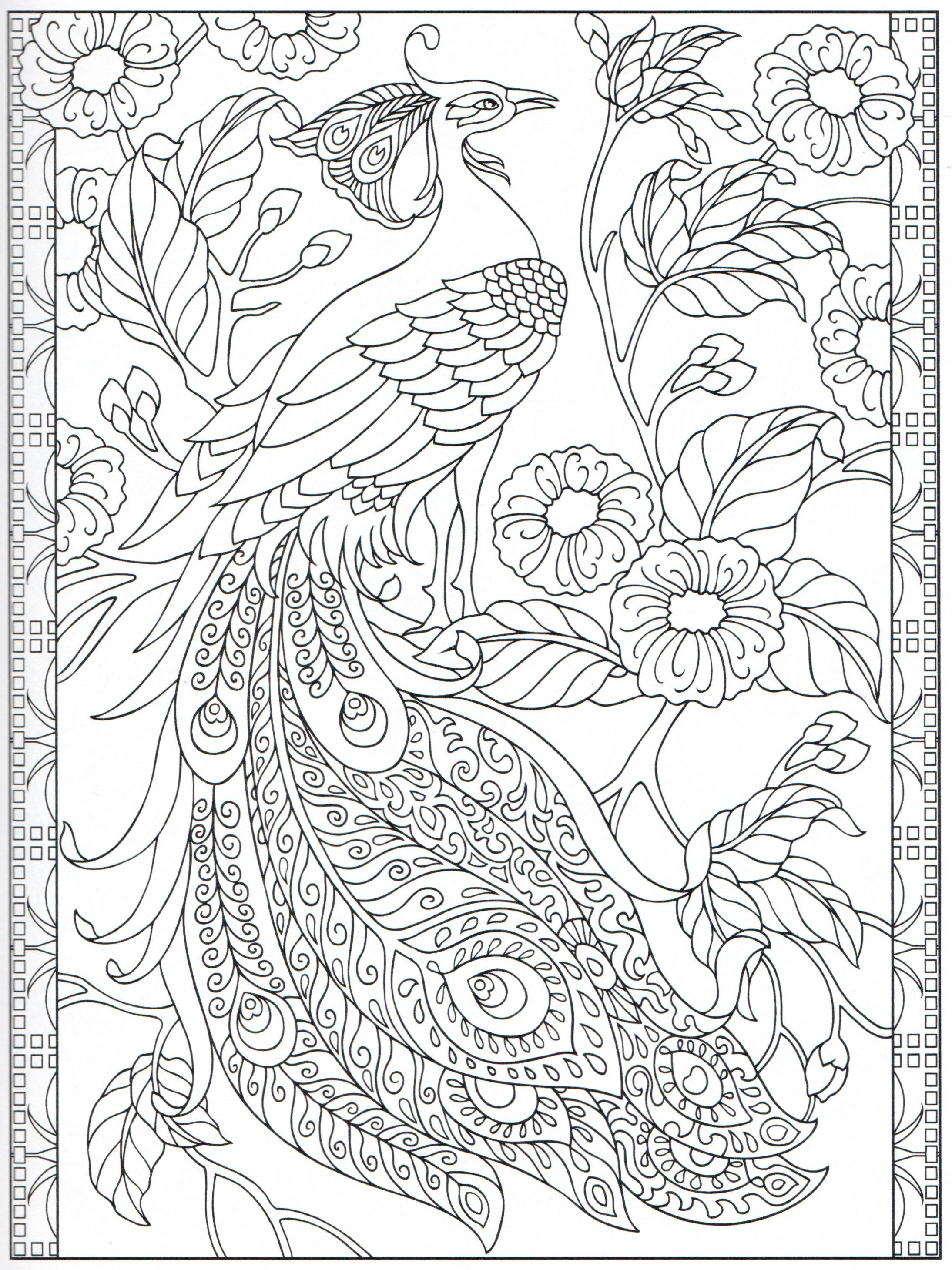 Peacock coloring page 2431 Color pages Stencils