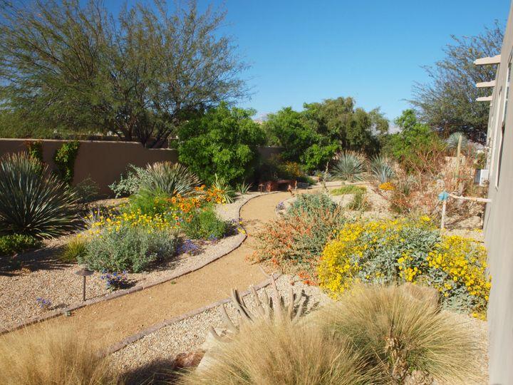 desert landscape backyard