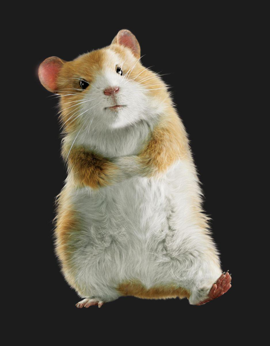 Bucky G Force 27747805 938 1200 Jpg 938 1200 Funny Hamsters Hamster Animals
