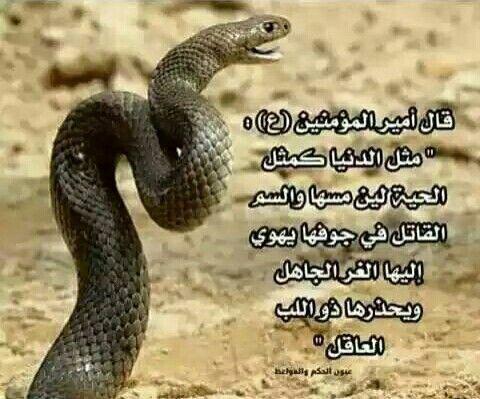 Pin By Kamal Alzyde On ادعوني استجب لكم Qoutes Snake Lom