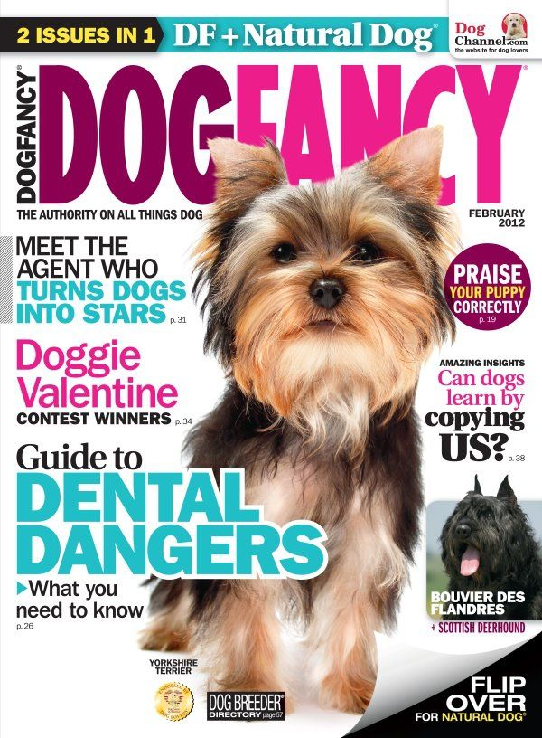 Magazine Subscription Deals Compare Prices Fancy Dog Dogs Natural Dog