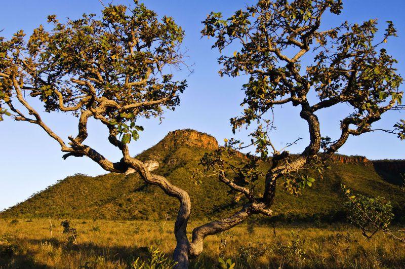 Cerrado Brasileiro Ganha Exposicao Permanente No Jardim Botanico