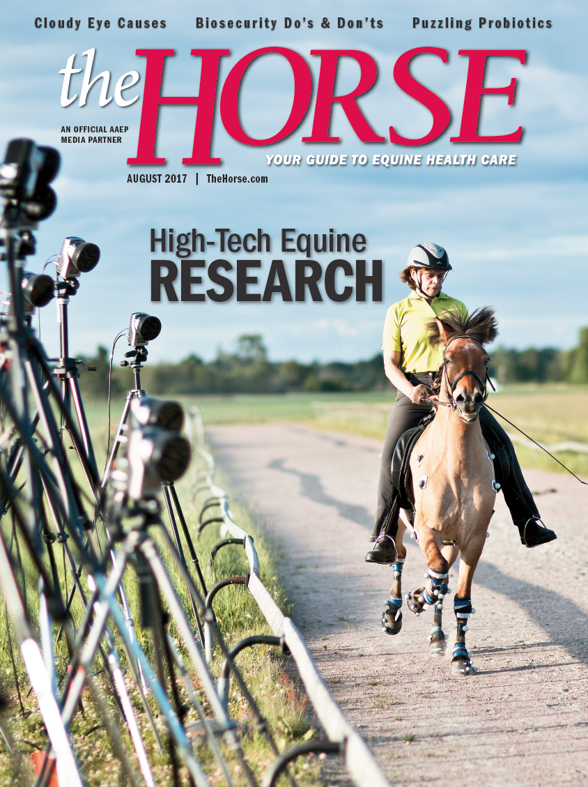 Keeping Horses Cool In Hot Weather Kentucky Equine Research Horses Hot Weather Beat The Heat