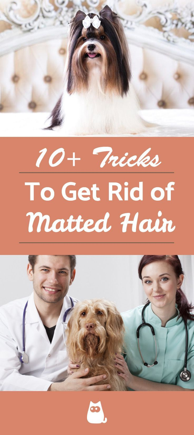 10+ Tips to Remove Matted Dog Hairdog hair matted