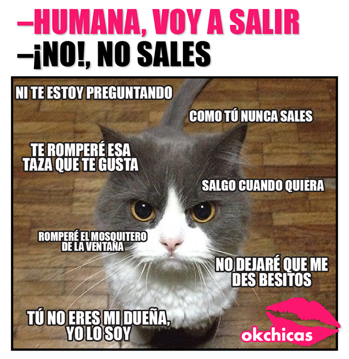 Memes De Gatos Tiernos