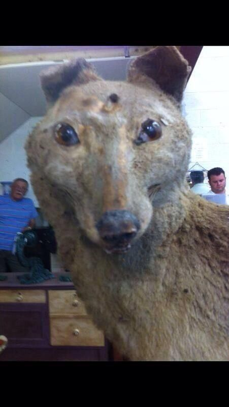 19 reasons why crap taxidermy best slots youtube