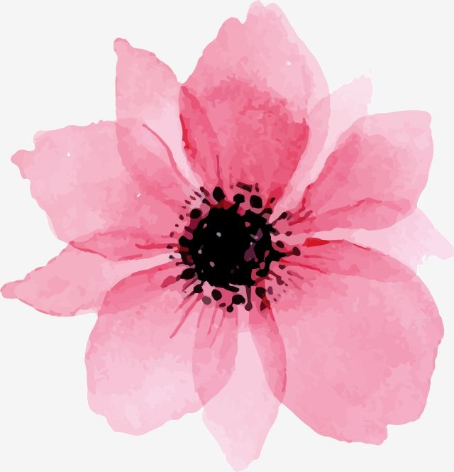 Pink Watercolor Flowers Pink Watercolor Flower Png And Vector