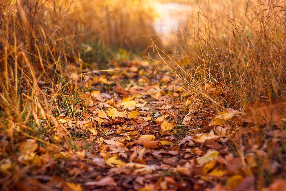 Autumn Path by jxsnyder