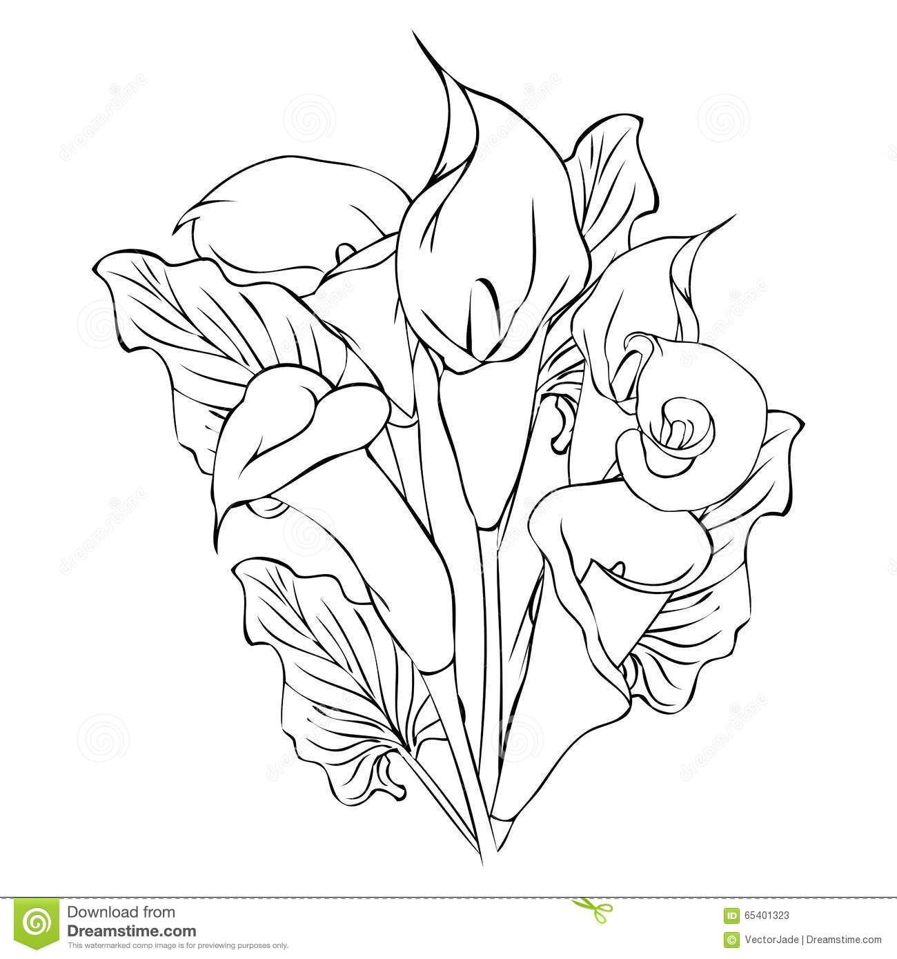 Calla Lily Flower Line Drawing Novocom Top In 2021 Calla Lily Tattoos Flower Line Drawings Lily Tattoo
