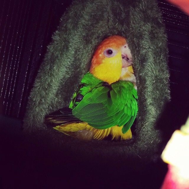 My baby boy,Ziki #caique