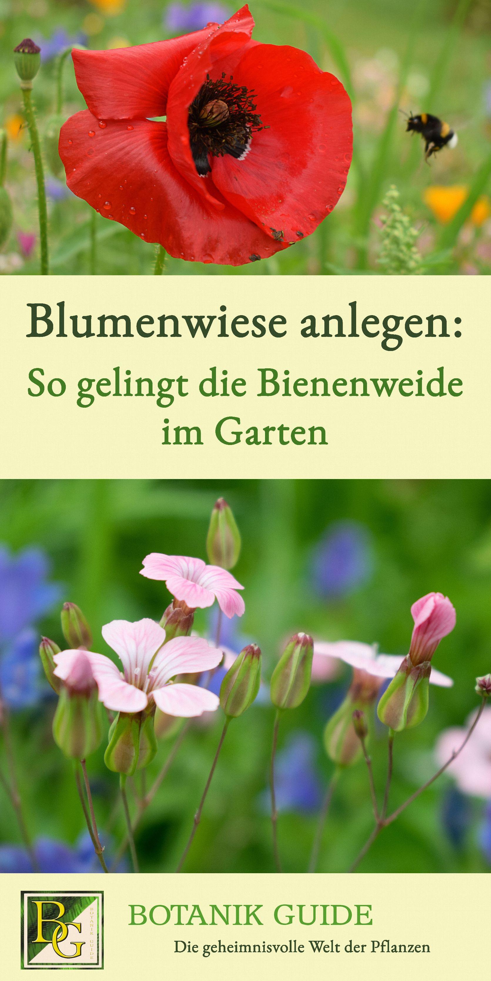 Photo of Blumenwiese für Insekten!