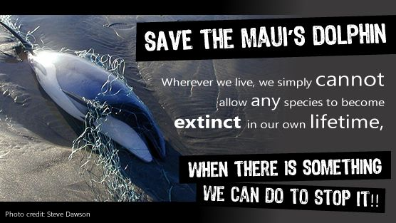 New Zealand Prime Minister John Key: Save Mauis Dolphins from Extinction. https://www.change.org/petitions/new-zealand-prime-minister-john-key-save-maui-s-dolphins-from-extinction?utm_campaign=autopublish_mobile_medium=facebook_source=share_petition @Sea Shepherd Conservation Society #defendconserveprotect