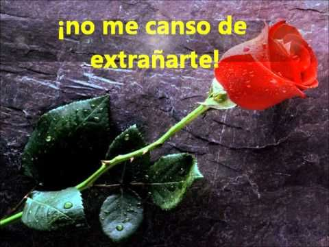 Dedicado A Mi Santa Madre Que Esta En El Cielo Papel Pintado Flores Rosas Fondo De Pantalla Pensamientos Para Mamá