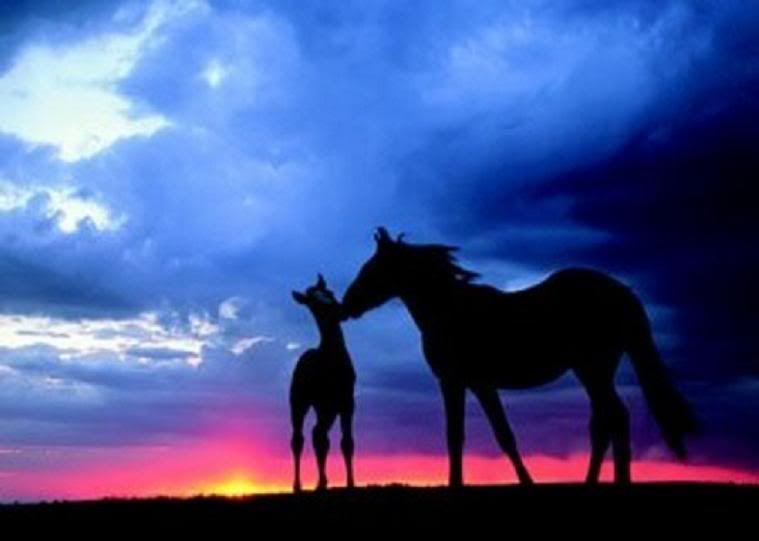 pretty horses | Pretty Horses Graphics Code | Pretty ...