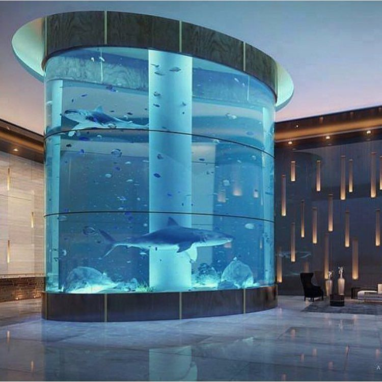 Beautiful shark tank in home photo via Beautiful aquariums for home