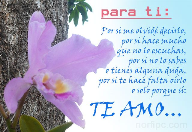 Poema Para Decir Te Quiero Sin Decirlo Frases De Amor Para Dedicar A Mi Novia Novio O Relacion Frases