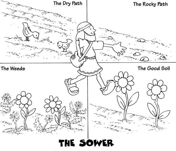 Parable Of Sower Coloring Page From Matthew Chapter 13 Bilder