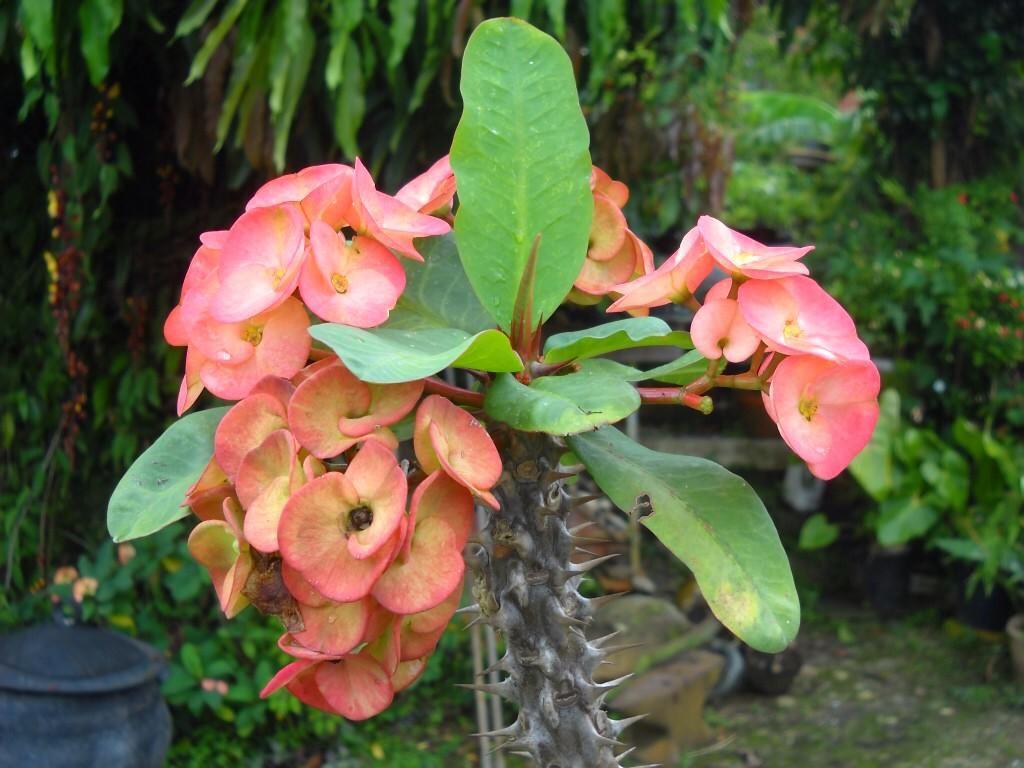 Sois satisfait des fleurs, des fruits, même des feuilles, si c\'est ...