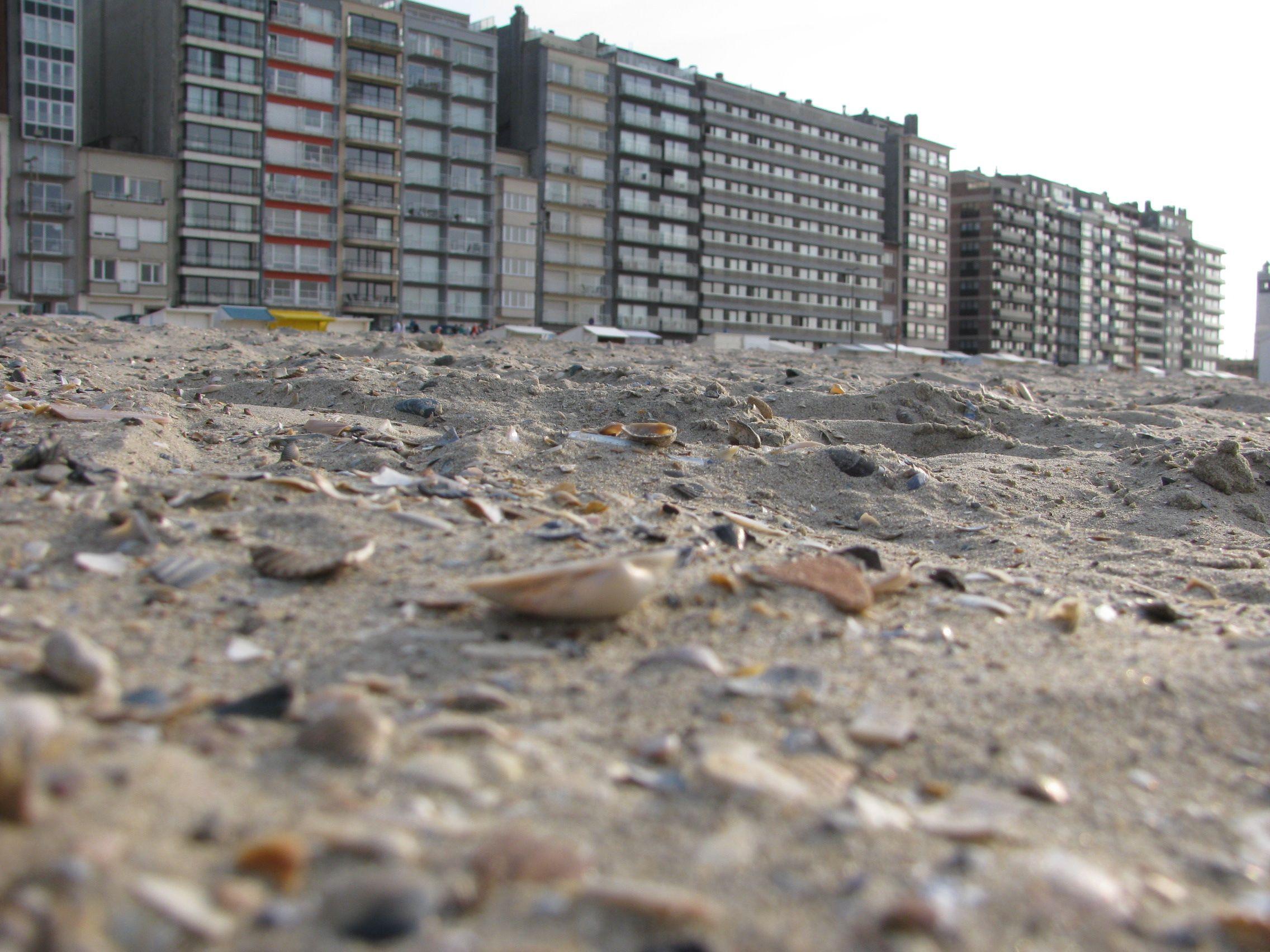 Shell on the beach, Belgium