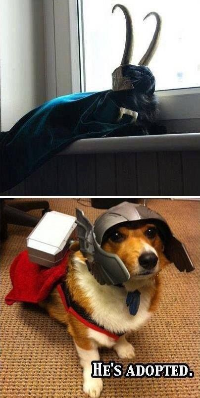 ♥.♥ aww catloki and dogthor