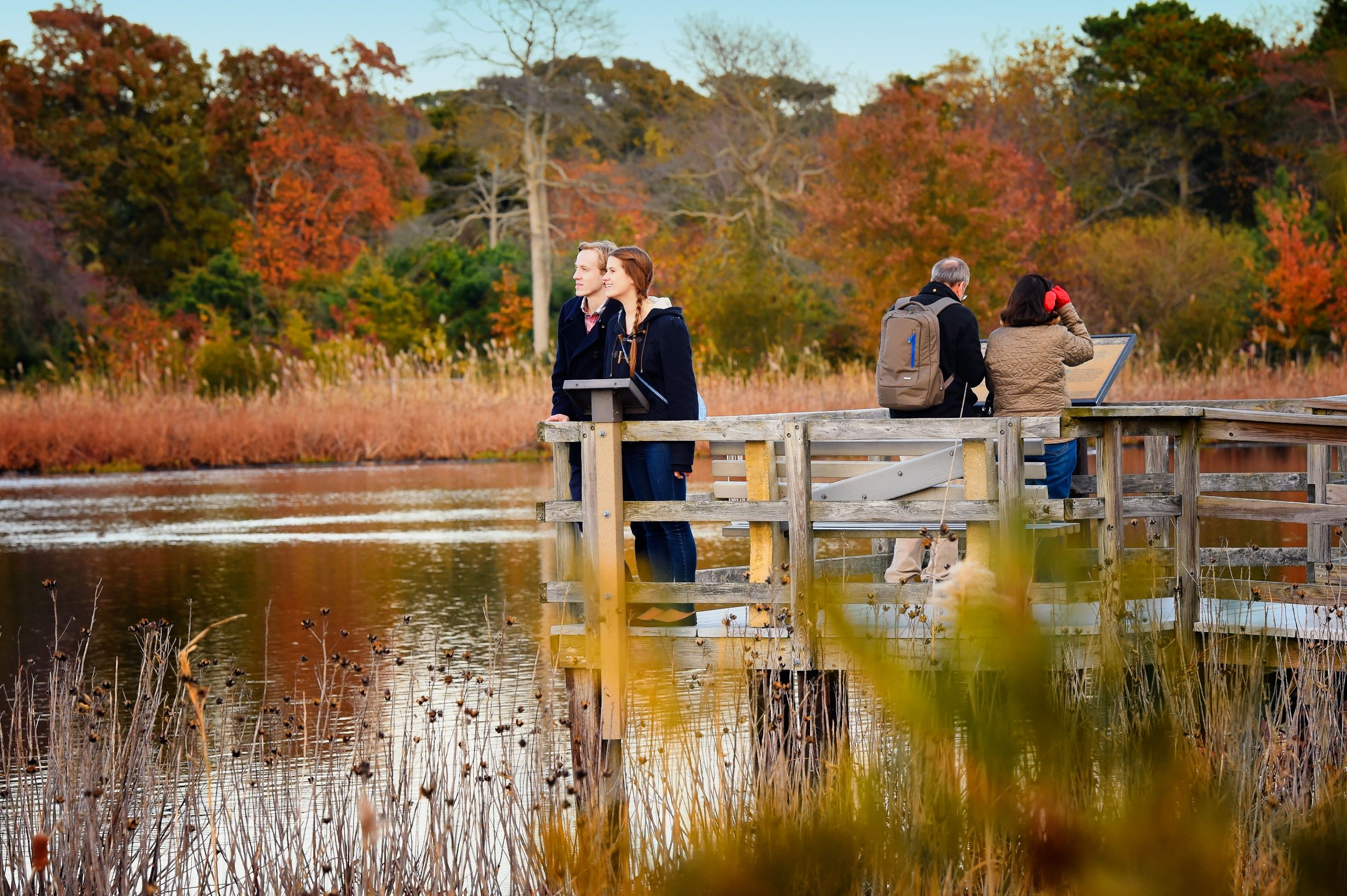 Become one with nature in the fall. Autumn, foliage, Cape May Point, Ocean City, Jersey Cape, Cape May County, New Jersey