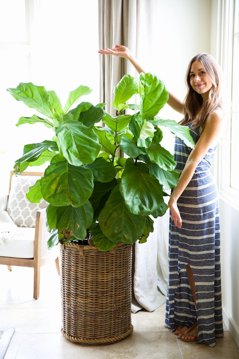 How to keep your houseplants green gorgeous planters for Indoor green plants images
