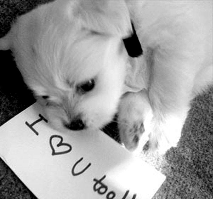 Puppy Love Cute Dogs Cute Dog Photos Puppy Love