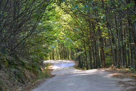 Life+ Infonatur 2000 @LifeInfonatur 27 sep El otoño, estación ideal para adentrarse en la #rednatura2000. pic.twitter.com/3ARCcjweTI