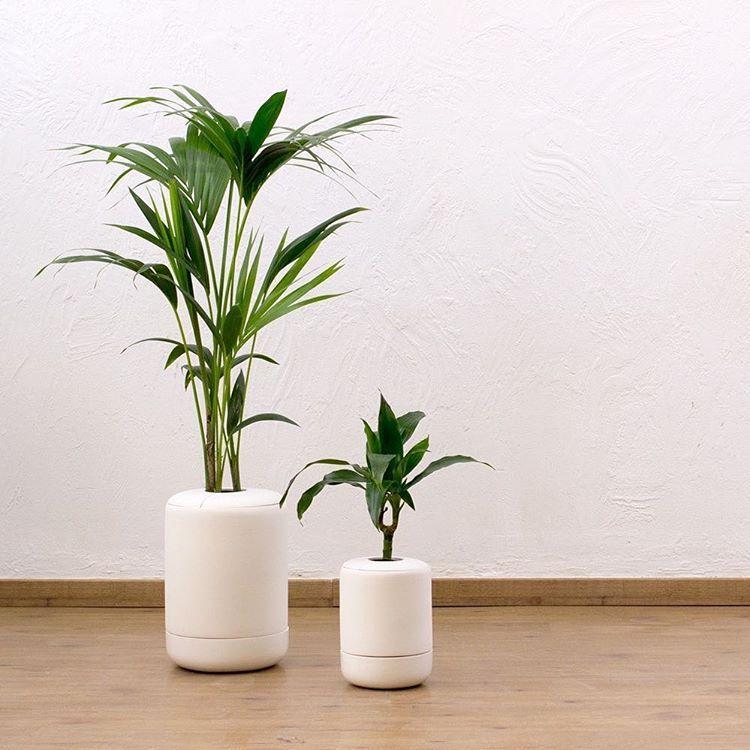 macetas especiales para plantas de tallo largo y de un solo tronco