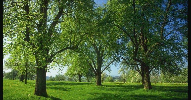 Gambar Lingkungan Alam Indah Gambar Alam Nan Indah Gambar Lingkungan Alam Indahhttp Pemandanganoce Blogspot Com 2017 10 Gambar Alam Pemandangan Alam Semesta
