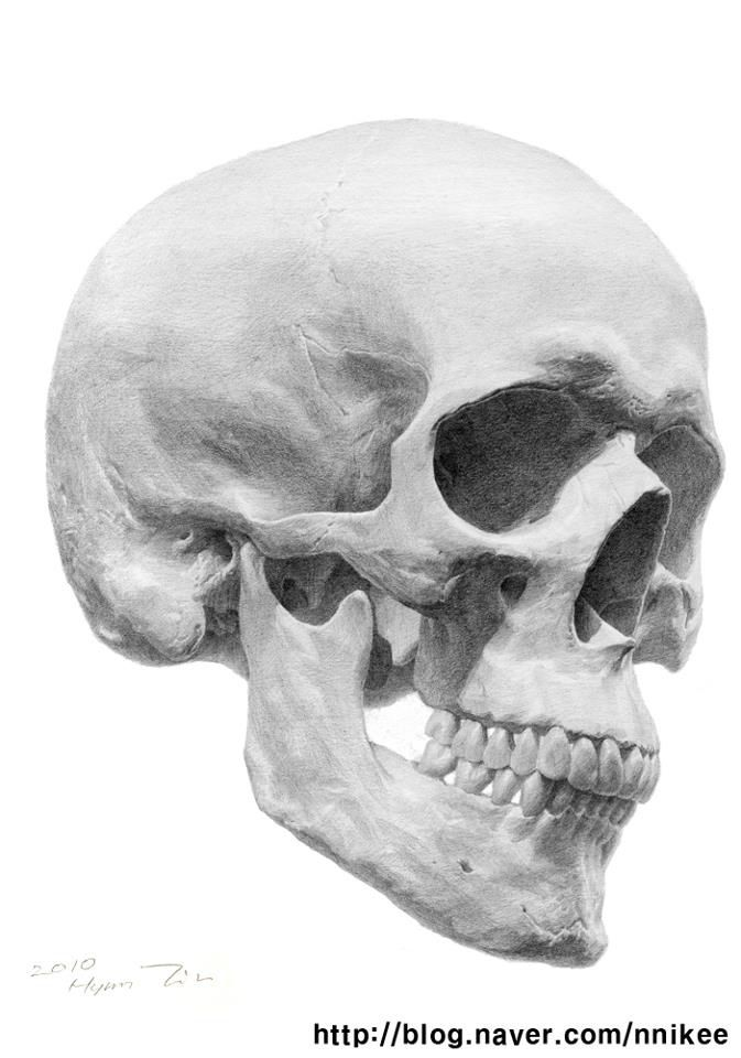 How To Draw An Amazing Skull