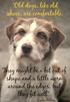 Quote about older dogs. Old dogs are like old shoes ...