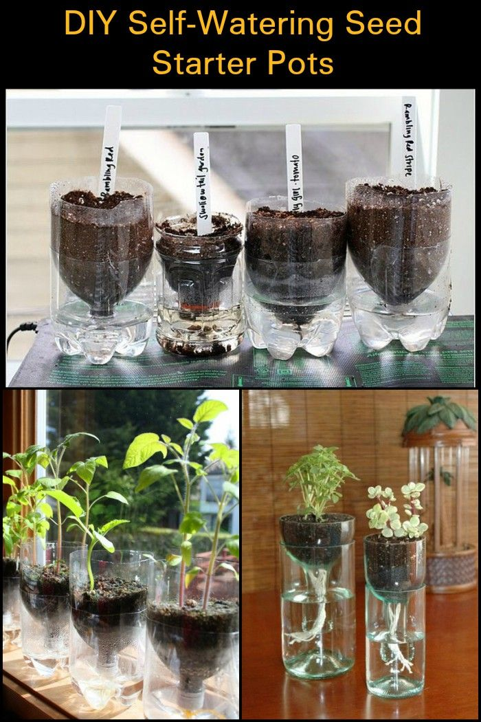 Diy Self Watering Seed Starter Pots Self Watering Indoor Vegetable Gardening Seed Starter